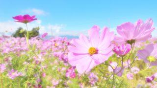 男性を追いかけない!女性は美しく咲く花
