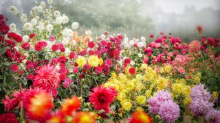 片思いを実らせる方法は花を育てるように