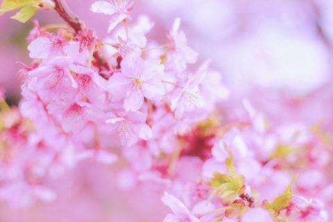 恋をつかみたいなら高嶺の花より女性らしさ