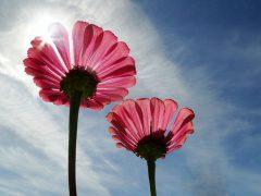 恋愛の運気を回復させる3つの方法